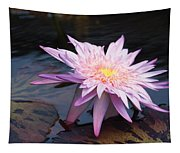 Purple Pink Yellow Waterlily... Tapestry