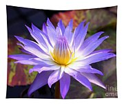Purple Waterlily With Fall Lilypads Tapestry