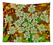Queen Anne's Lace Or Wild Carrot Near Alamo-michigan Tapestry