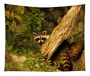 Raccoon Tapestry