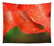 Rain Dance - Red Flower Photography By Sharon Cummings Tapestry