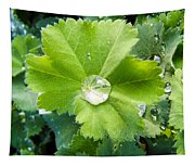 Raindrops On Leaves Tapestry
