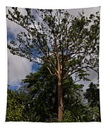 Rainbow Eucalyptus - Tall Proud And Beautiful Tapestry