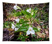 Rare Great White Trilliums Tapestry