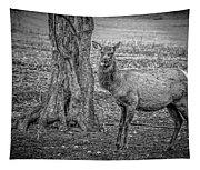 Raspberry Elk Black And White Tapestry
