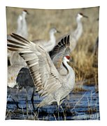 Ready To Fly Tapestry