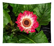 Red And White Gerber Daisy Tapestry