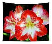 Red And White Amaryllis Tapestry