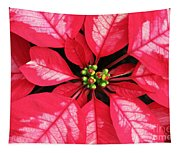 Red And White Poinsettia Tapestry