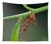 Red Ant Tapestry