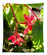 Red Begonia Peaking Through The Leaves Tapestry