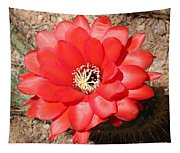 Red Cactus Flower Square Tapestry