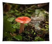 Red Coral Mushroom Tapestry