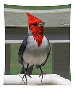 Red Crested Cardinal Tapestry