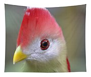 Red Crested Turaco Tapestry