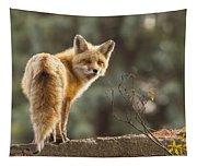 Red Fox In The Sunset Tapestry