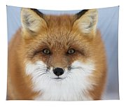Red Fox Staring At The Camerachurchill Tapestry