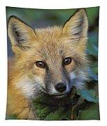 Red Fox Vulpes Vulpes, Gros Morne Tapestry