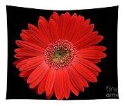 Red Gerber Daisy #2 Tapestry