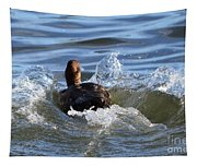 Red Head Duck Resurfaces With A Splash Tapestry