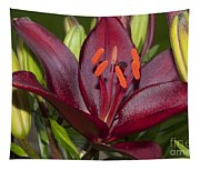 Red Lily 2 Tapestry