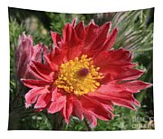 Red Pasque Flower Tapestry