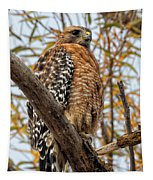 Red-shouldered Hawk In A Willow Tree Tapestry