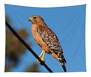 Red-shouldered Hawk On A Wire Tapestry