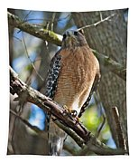 Red-shouldered Hawk On Branch Tapestry
