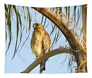 Red-shouldered Hawk On The Palm Tree Tapestry