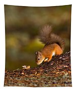 Red Squirrel In Autumn Tapestry