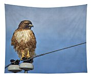 Red Tail On Watch Tapestry