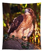 Red Tailed Hawk - 53 Tapestry