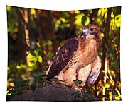Red Tailed Hawk - 54 Tapestry