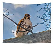 Red-tailed Hawk Tapestry