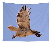 Red Tailed Hawk Tapestry