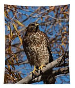 Red-tailed Hawk In A Willow Tree Tapestry