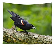 Red Winged Blackbird Tapestry