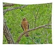 Red-shouldered Hawk Tapestry
