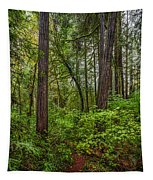Redwoods 2 Tapestry