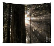Redwoods First Light Tapestry