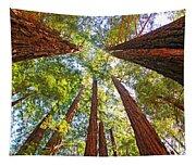 Redwoods Tapestry