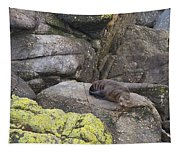 Resting Seal Tapestry