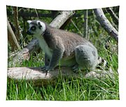 Ring Tailed Lemur Tapestry