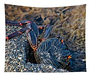 Rock Crab At He'eia Kea Pier Tapestry