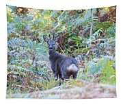 Roe Buck In Woodland Tapestry