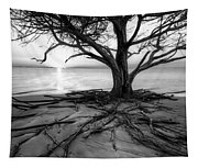 Roots Beach In Black And White Tapestry
