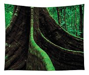 Roots Of A Giant Tree, Daintree Tapestry