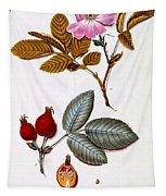 Rosa Villosa Tapestry