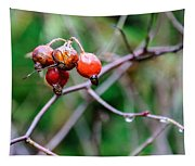 Rose Hip Wet Tapestry